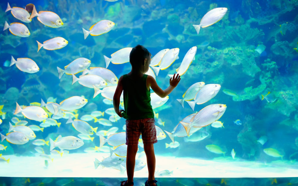 Ein kleiner Junge steht vor einem riesigen Aquarium und schaut begeistert den vielen Fischen zu