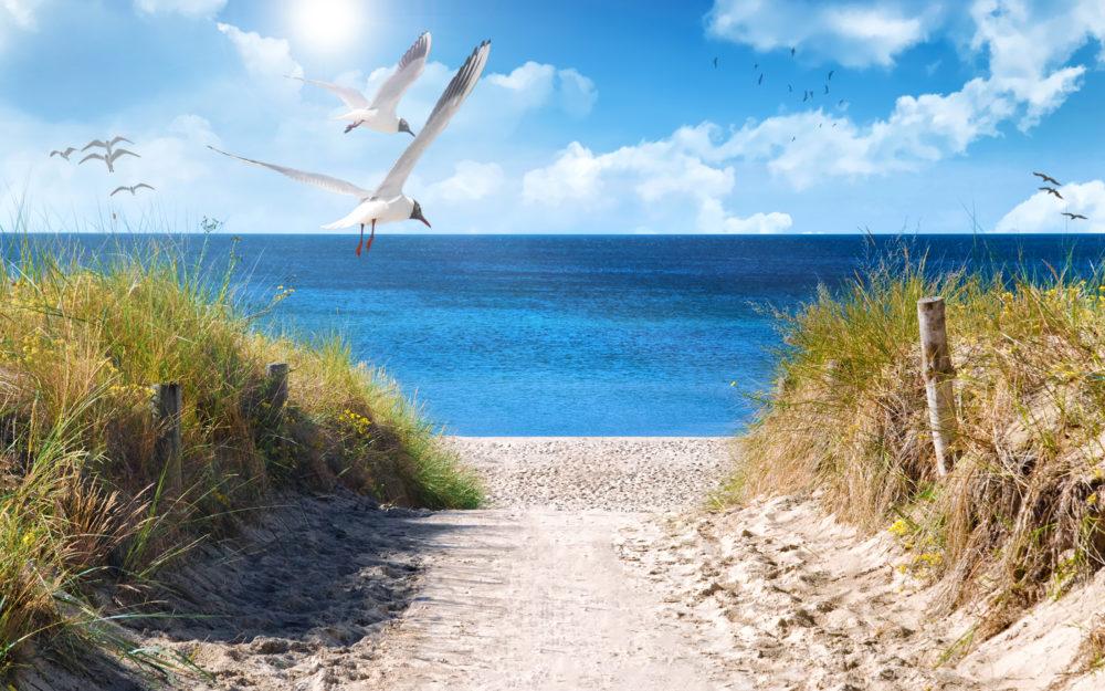 Blick aus den Dünen auf das Meer mit fliegenden Möwen bei Sonnenschein