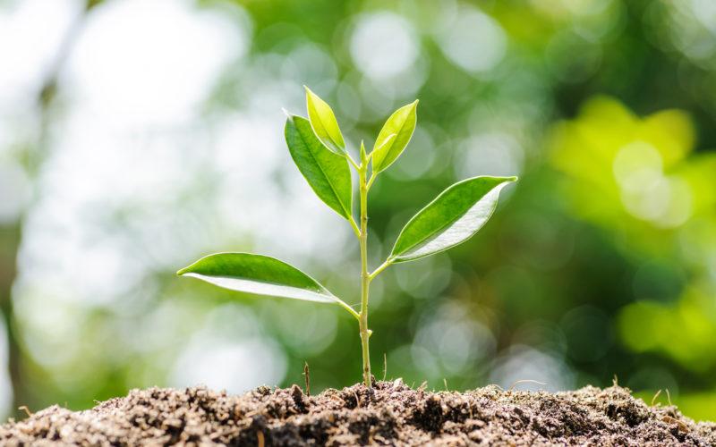Kleine grüne Pflanze, in der Natur wachsend aus einem Erdhügel, als Zeichen für Nachhaltigkeit.