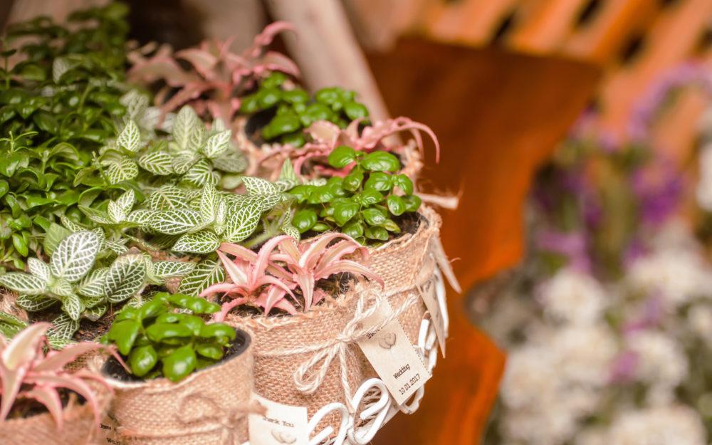 Kleine Pflanzen in Töpfchen als Gastgeschenke auf der Hochzeit